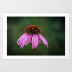 Purple Coneflower Art Print