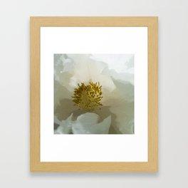 Paeonia White Grace2 Framed Art Print