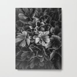 leaves texture background in black and white Metal Print
