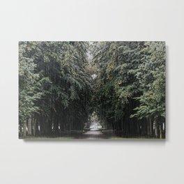 Rain in the woods on a path | AIM52 Photography Print Metal Print