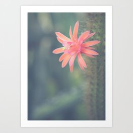 Little Cactus Flower Art Print