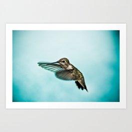 hummingbird no.1 Art Print