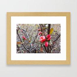red little flowers Framed Art Print