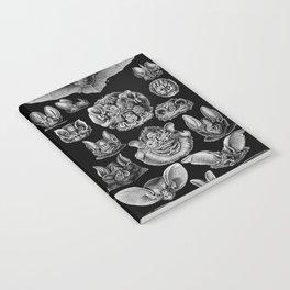 1904 Haeckel Chiroptera Notebook