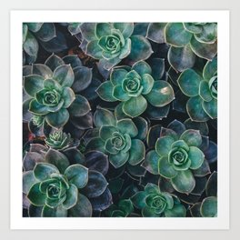 Succulents Hipster Gardening - plantlover aloevera cactus Art Print