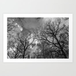 Cloudy day in the forest Art Print
