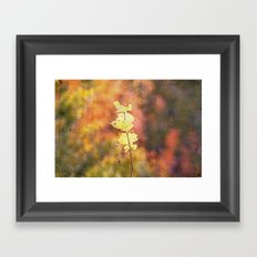 Seasonal Closeup - Autumn Framed Art Print