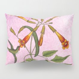 Hummingbird with Trumpet Vine, Vintage Natural History Collage Pillow Sham