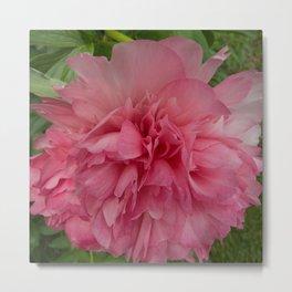 Rose Pink Peony by Teresa Thompson Metal Print