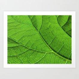 Green Leaf's Veinlet Art Print