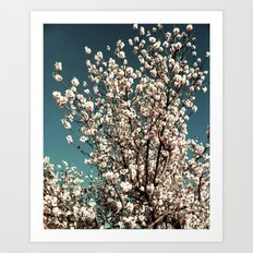 Winter Blossoms Art Print