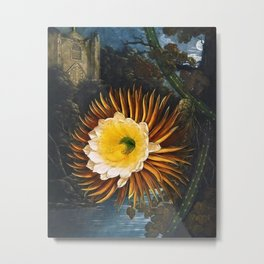 'The Night Blowing Cereus' Cactus by Philip Reinagle (flower) and Abraham Pether (background) Metal Print