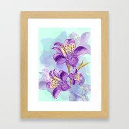 Purple Lilly Framed Art Print