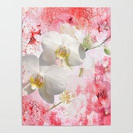 Weiße Orchideen Poster
