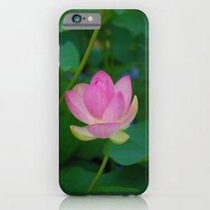 Lotus Blossom Flower 28 iPhone 6s Slim Case