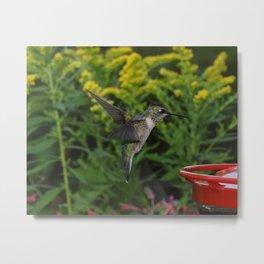 Hummingbird 29 Metal Print