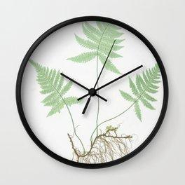Botanical Beech Fern Wall Clock