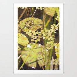 frogger... Art Print