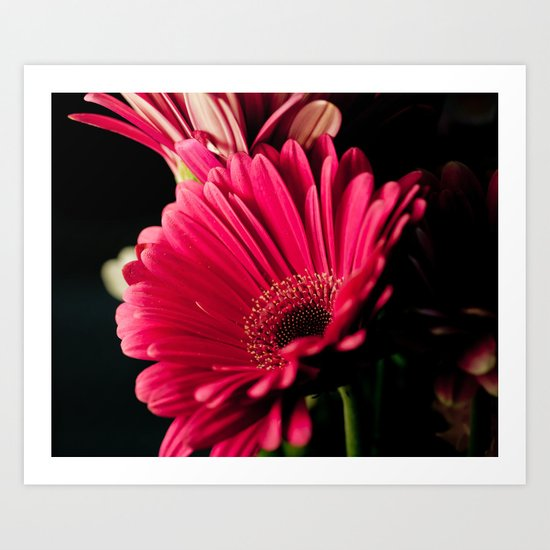 Pink Shadows Art Print