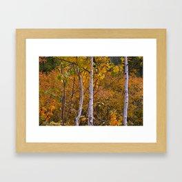 Birch/Bouleau Framed Art Print
