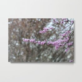 Red Bud in Spring Metal Print