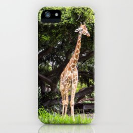 giraffe with foliage iPhone Case