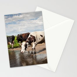 Herd of cows walking across puddle Stationery Cards
