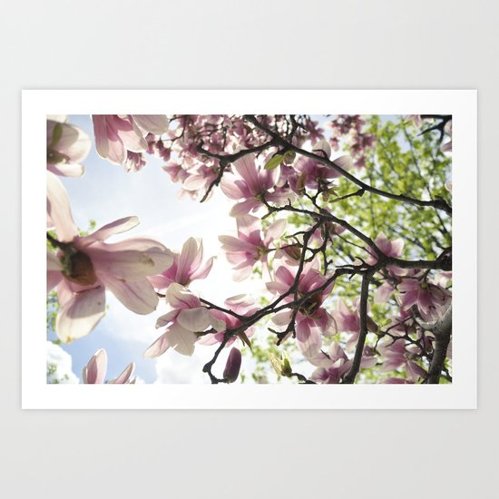Magnolia Magic Art Print