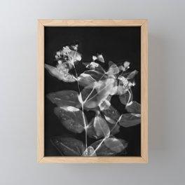 X Ray Blooms Framed Mini Art Print