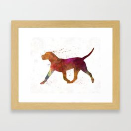 Dogo Canario in watercolor Framed Art Print
