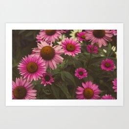Wild Cone Flowers 2 Art Print