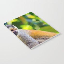 Squirrel monkey - Costa Rica Notebook