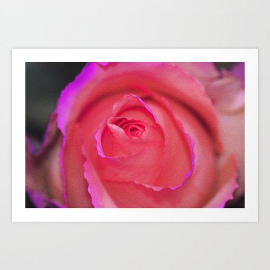 soft rose Art Print
