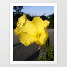 Urban Flowers Art Print