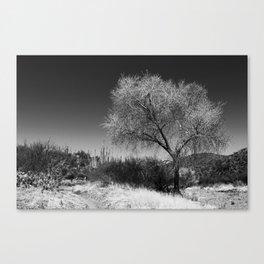 Silver Tree Canvas Print