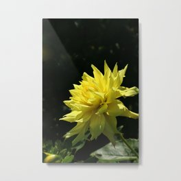 Yellow Passion Metal Print