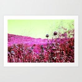 Thornberry  Art Print