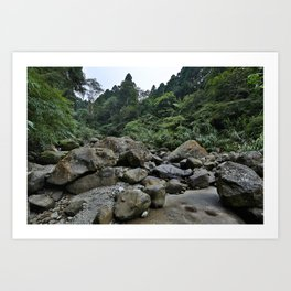 Forest Rocks Art Print