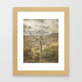 Ceiba Tree at Forest Guayas Ecuador Framed Art Print