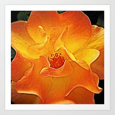'SUNSHINE PETALS' Art Print