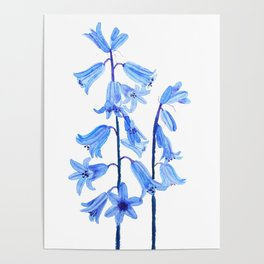 botanical bluebell flowers watercolor Poster