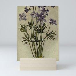 Vintage Botanical Print - Bird-Foot Violet Mini Art Print