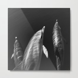 Beautiful wild dolphins black and white Metal Print