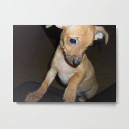 Walnut-Puppy Palooza Metal Print