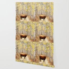 Cow in aspens Wallpaper
