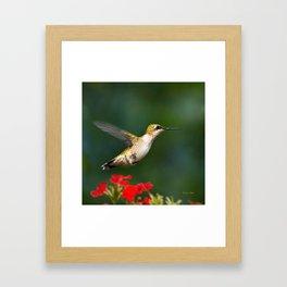 Summer Hummingbird Framed Art Print