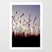 Purple Reed  Art Print