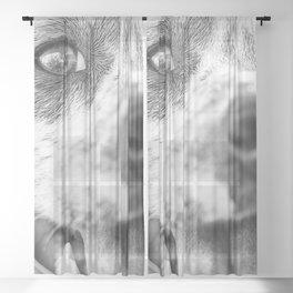 Dalmatian 2 Sheer Curtain