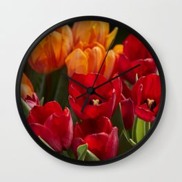 tulip flower in spring in the garden Wall Clock