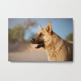 Chilean Dog Metal Print